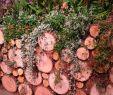 Permakultur Garten Anleitung Neu Khar Khodeti Khodeti On Pinterest