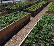 Permakultur Garten Planen Luxus 10 Beautiful Flower Bed Ideas