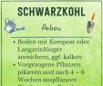 Pflanze Mit G Best Of Schwarzkohl Profi Tipps Zu Anbau & Ernte