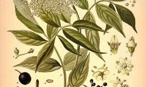 72 Luxus Pflanze Mit G