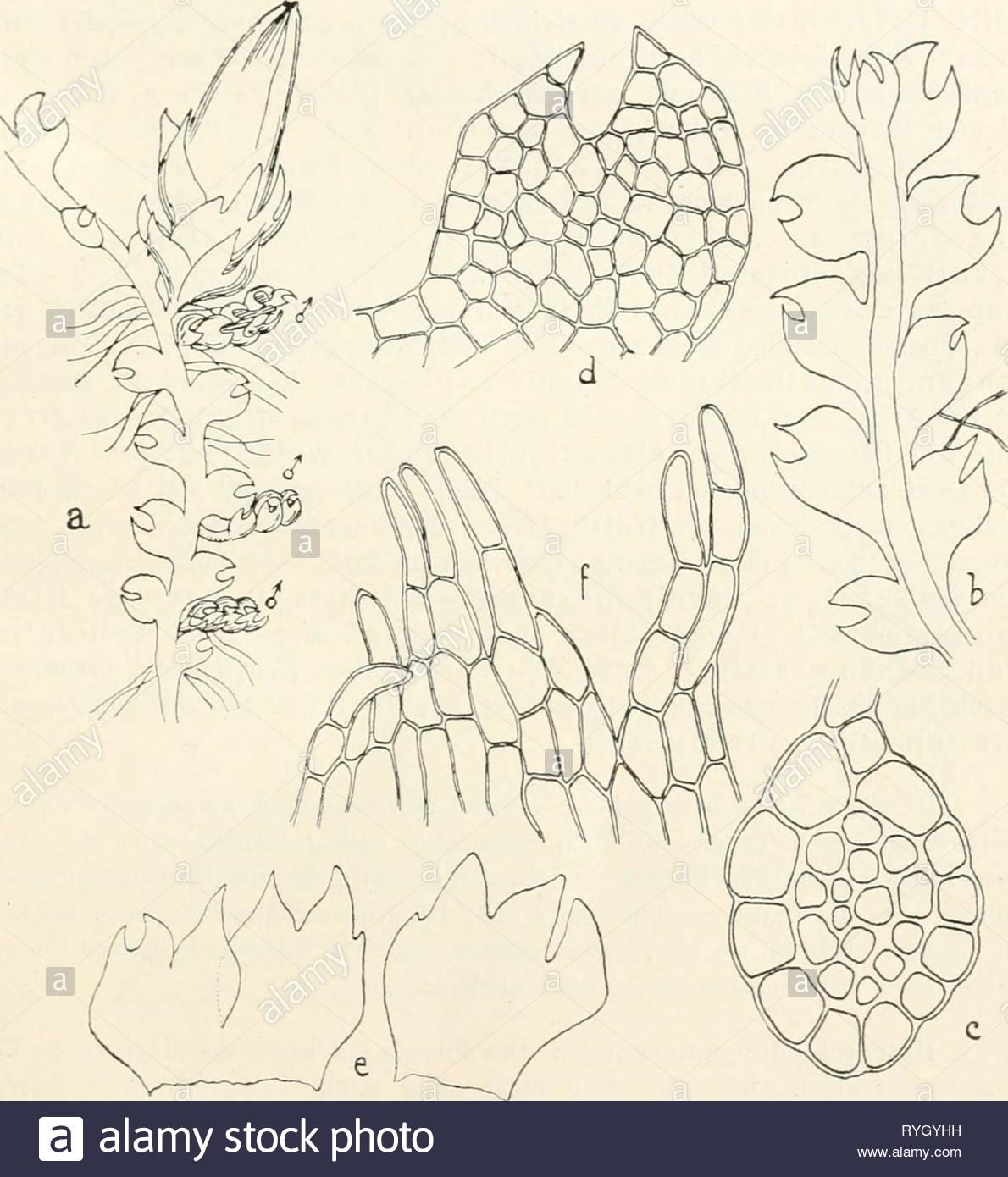 dr l rabenhorsts kryptogamen flora von deutschland oesterreich und der schweiz drlrabenhorstskr0602rabe year 1912 cephalozia 55 pflanze kommt wahrecheinlich auch in mitteleuropa vor doch ist sie bis jetzt zu wenig bekannt gewesen und darum voraussichtlich mit c media ver wechselt worden lm bryologen mit ser seltenheit besser bekannt zu machen ist sie abgebildet worden standorte finnland prov nyland paroecia pern sund 1873 justin det lindberg paroecia lojo ad lill ojamo 1877 s 0 lindberg in jugo loh jan selka 1881 s o lindbergj originale schweden RYGYHH