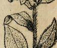 Pflanze Mit G Schön B£©cs Stock S & B£©cs Stock Alamy