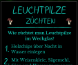 Pilze Im Garten Bilder Einzigartig Leuchtpilze Infos Bilder & Anbau Anleitung
