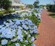 Reihenhausgarten Gestalten Ideen Luxus Cape Cod