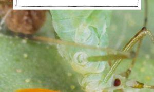 43 Schön Rote Ameisen Im Garten