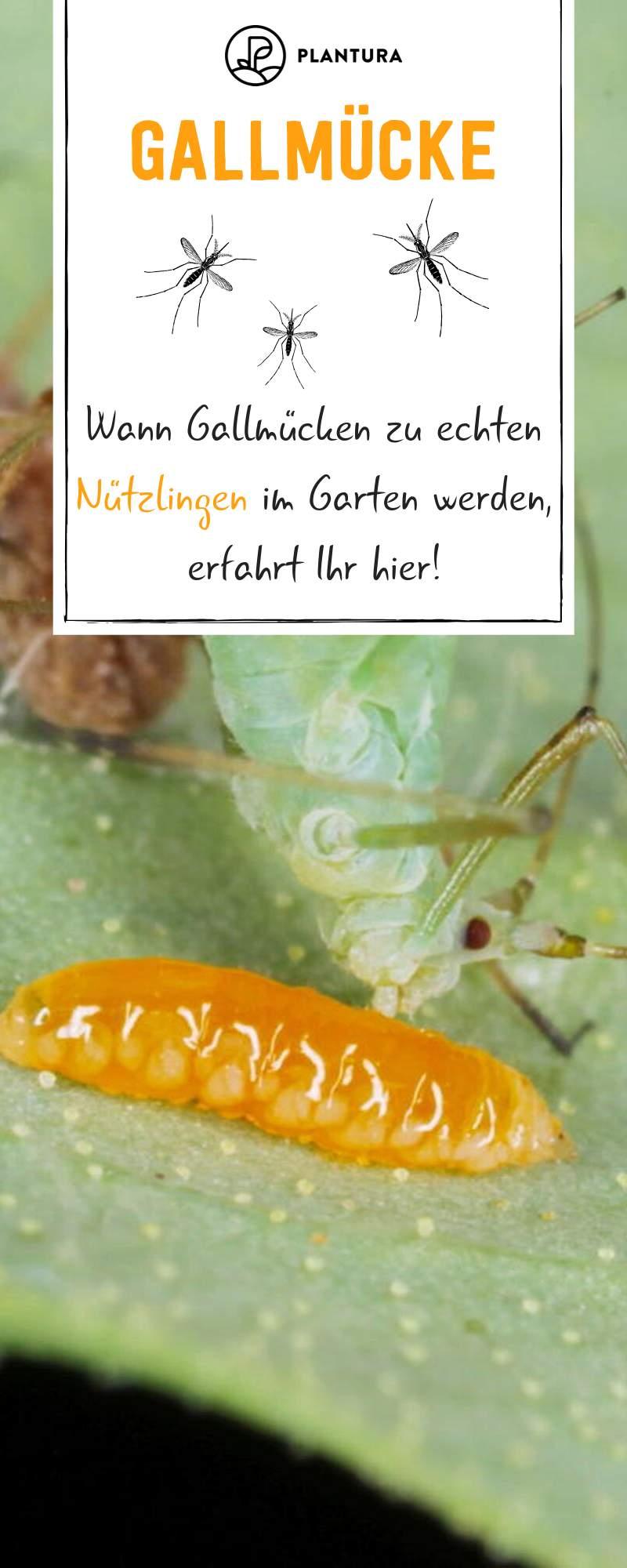 Rote Ameisen Im Garten Neu 40 Neu Raupen Im Garten Neu