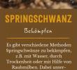 Schädlinge Im Garten Einzigartig Springschwanz Erkennen & Erfolgreich Bekämpfen