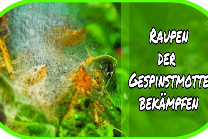 Schädlinge Im Garten Neu Raupen Der Gespinstmotte Im Garten Bekämpfen