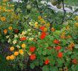 Schädlinge Im Garten Schön 70 Best Schädlinge Im Garten Images On Pinterest