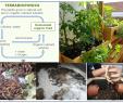 Schwimmingpool Für Garten Best Of Sustainability Free Full Text