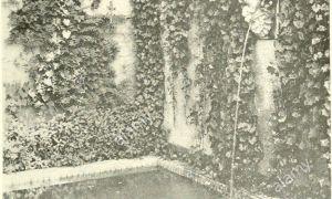 68 Elegant Schwimmingpool Für Garten