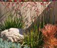 Sitzecken Im Garten Mit überdachung Einzigartig 1288 Best Mediterranean Style Gardens Images In 2020