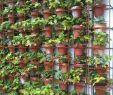 Sitzecken Im Garten Mit überdachung Neu Greenhouse