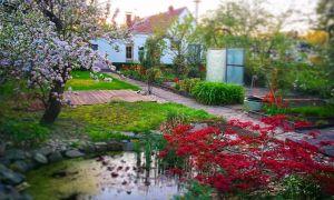 81 Best Of sommer Garten