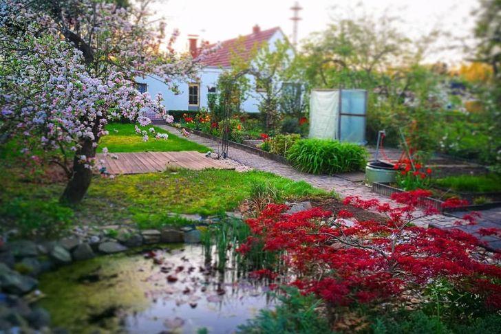 Sommer Garten Inspirierend Endlich sommer Im Garten Garden Flowers Trees sommer
