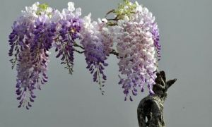 10 Genial Spalierbäume Schneiden