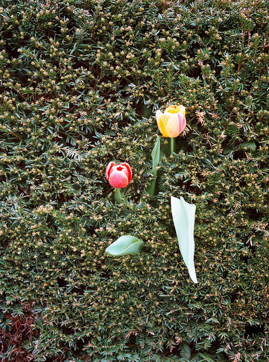 Tulpen Tales Anne SophieStolz