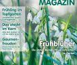 Tulpen Im Garten Best Of Calaméo Das Grönfingers Magazin 1 2018