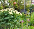 Tulpen Im Garten Best Of Mein Garten Im April 2018 ⋆ Cakeand Pass