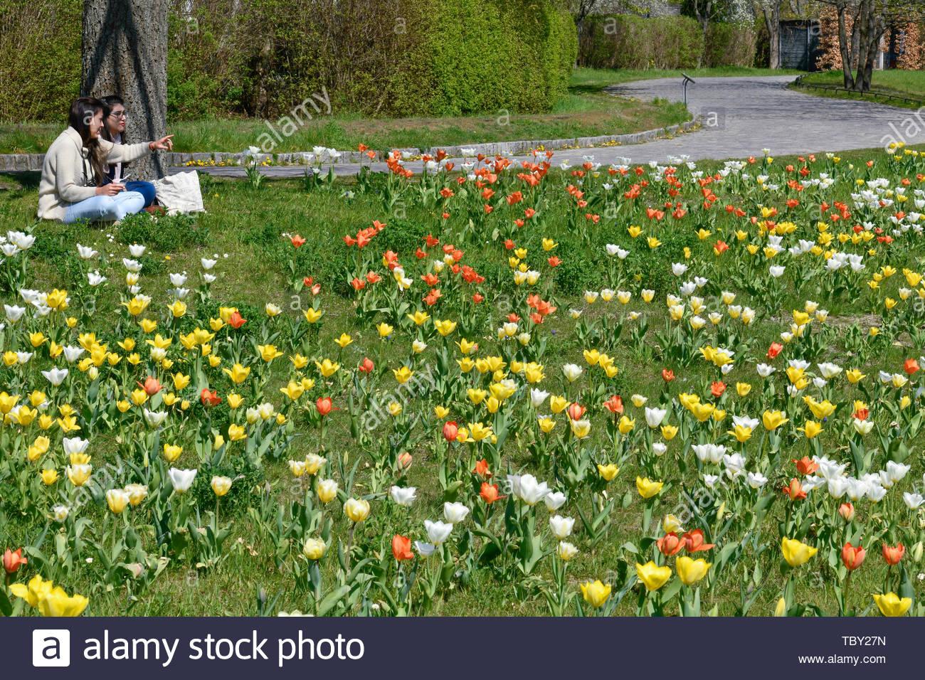 tulip blossom britzer garden britz neuklln berlin germany tulpenblte britzer garten deutschland TBY27N