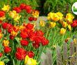 Tulpen Im Garten Einzigartig Frühling Im Garten 2019 Neues Aus Der Gartenwelt