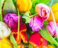Tulpen Im Garten Genial Tipps Zur Pflege Von Tulpen In Der Vase Für Eine Längere