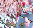Tulpen Im Garten Luxus List Gladiole S and Videos