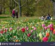 Tulpen Im Garten Luxus Tulpenwiese Stock S & Tulpenwiese Stock Alamy
