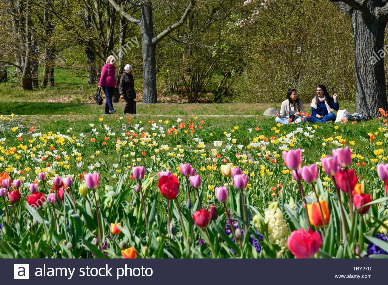 tulip blossom britzer garden britz neuklln berlin germany tulpenblte britzer garten deutschland TBY27D