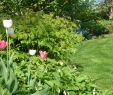 Tulpen Im Garten Neu Akzente Setzten Mit Tulpen Farbtupfer Im Frühjahr