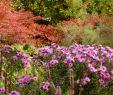 Tulpen Im Garten Neu Der Garten Im Herbst Herbst Das Gartenjahr
