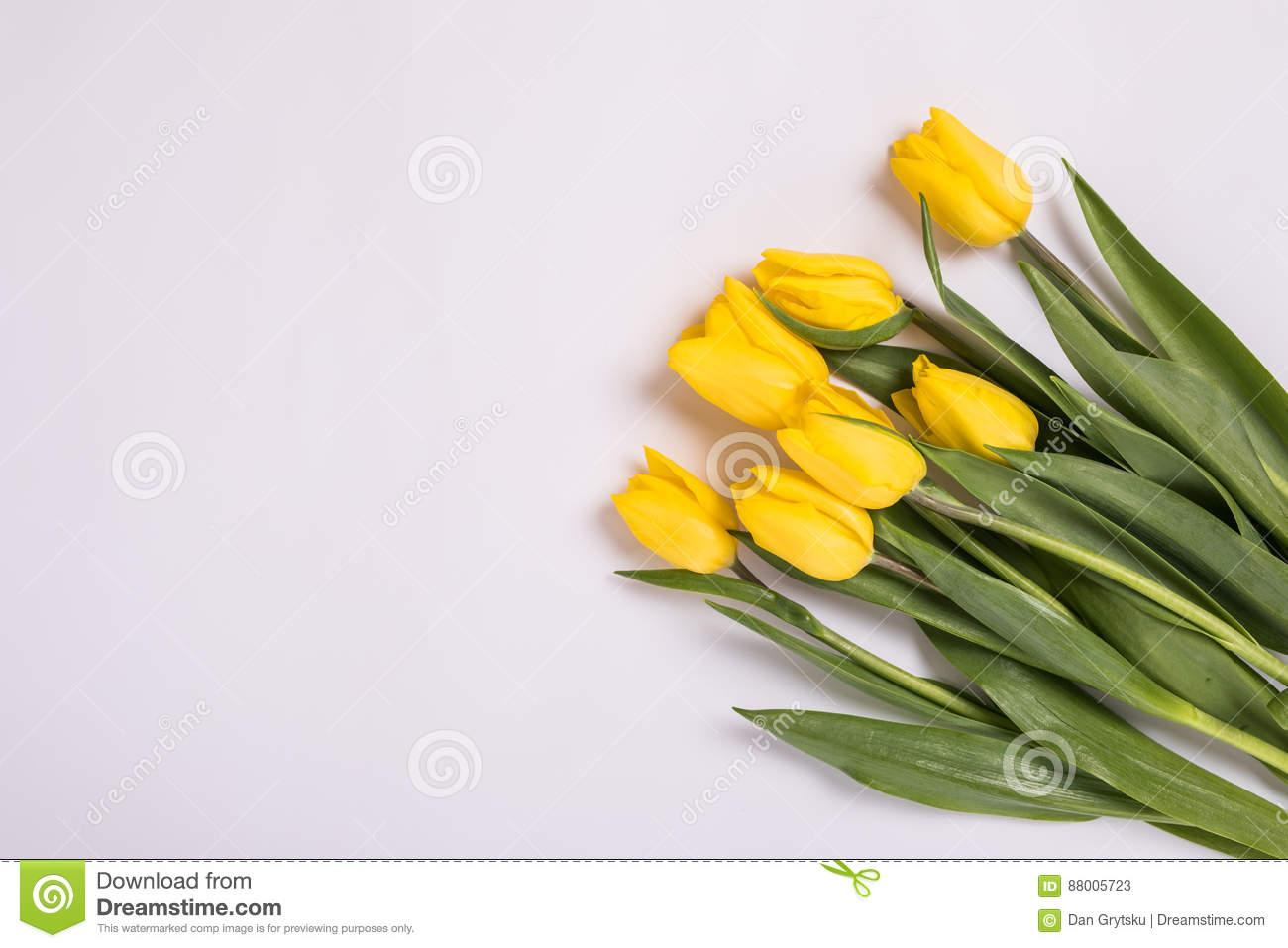 gelbe tulpen herein auf weißem hintergrund romantische blühende karte für geburtstag jahrestag valentinsgruß s mutter s oder