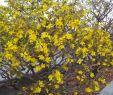 Tulpen Im Garten Neu Yellowblossom Instagram S and Videos