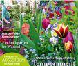 Tulpen Im Garten Schön Cfcfcfcfecefcefy by Elcicario43 issuu
