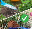 Ungeziefer Im Garten Frisch Statt Kunstdünger Natürlich Düngen Mit Pflanzen Und