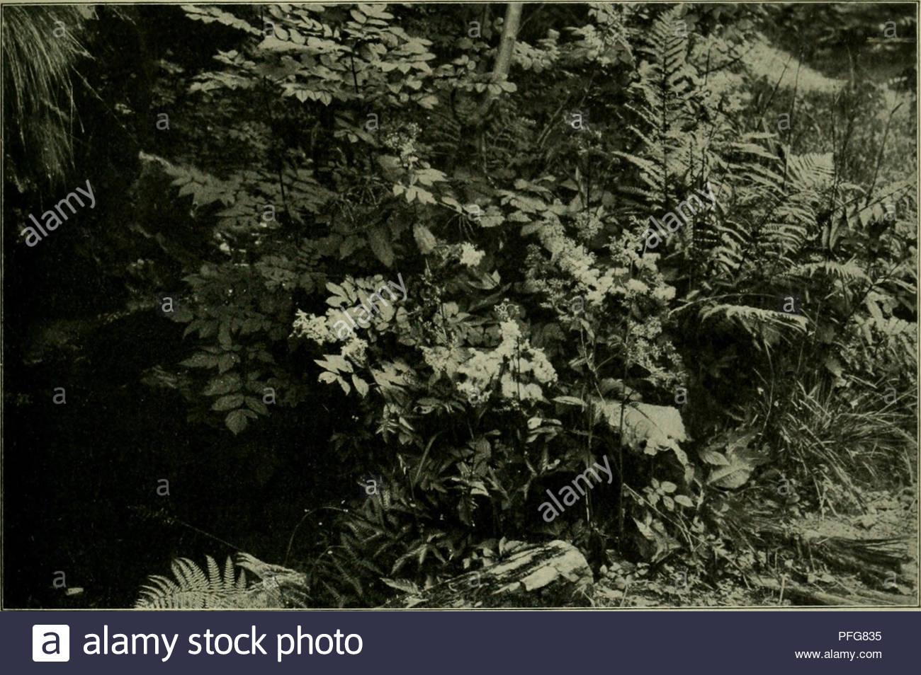 das leben der pflanze plants plants plants phytogeography 2tc pfkangen 101 5rtiingfeibefraut gepflanzt roerben gallna vulu is erb tteibefraut rcitft in srengen bie fr ie eigentmlid finb ju rcilb unb bringt groe nttufcungen nefalb id bei allen gartenmigen sirfungen oon itr abrate 3lte genannten niebrig teppicartigen pftanjen finb grnlich bi frifdgrn im egen a su ben beiben folgenben 2lrten e ift aber nidtig bie fnliden arben= maffen ufammensualten alfo grnliche unb raeitice nict burceinanber u pflanjen iere raeilicl PFG835