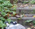 Vogel Garten Neu Fisch Keramik … Mit Bildern