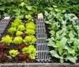 Wege Im Garten Anlegen Frisch Beet Anlegen Kunst Der Gartengestaltung