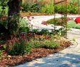 Wege Im Garten Anlegen Luxus Gartenwege Und Plätze Ratgeber Gartenplanung