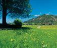 Weinanbau Im Garten Einzigartig 4 Wege An Fels Und Waal Wanderpara S Algund Herrliches