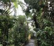 Zoologischer Garten Frankfurt Neu Botanischer Garten Der Universitat Heidelberg 2020 All You