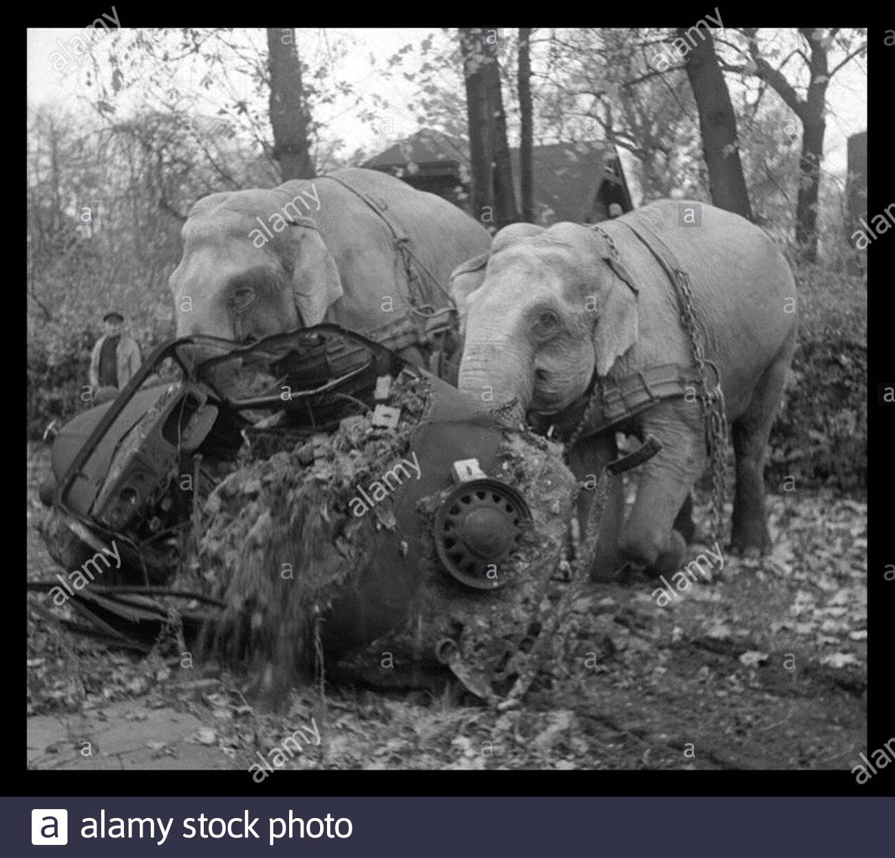 best ww pictures circus elephants kiri and many moving a wrecked car from a ed out garage in hamburg 1945 2B74W1M